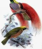 Darwinian aesthetics: sexual selection and the biology of beauty