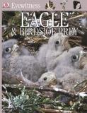 Eagle and birds of prey