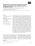 Báo cáo khoa học: Methylcitrate synthase from Aspergillus fumigatus Propionyl-CoA affects polyketide synthesis, growth and morphology of conidia