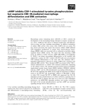Báo cáo khoa học: cAMP inhibits CSF-1-stimulated tyrosine phosphorylation but augments CSF-1R-mediated macrophage differentiation and ERK activation