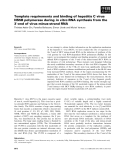 Báo cáo khoa học: Template requirements and binding of hepatitis C virus NS5B polymerase during in vitro RNA synthesis from the 3¢-end of virus minus-strand RNA