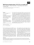 Báo cáo khoa học: BCR kinase phosphorylates 14-3-3 Tau on residue 233