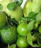 Những loại rau, củ, quả có lợi cho sức khỏe trong mùa thu