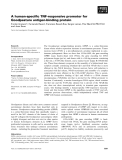 Báo cáo khoa học: A human-specific TNF-responsive promoter for Goodpasture antigen-binding protein