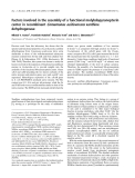 Báo cáo khoa học:  Factors involved in the assembly of a functional molybdopyranopterin center in recombinant Comamonas acidovorans xanthine dehydrogenase