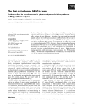 Báo cáo khoa học: The first cytochrome P450 in ferns Evidence for its involvement in phytoecdysteroid biosynthesis in Polypodium vulgare
