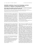 Báo cáo khoa học: Subcellular localization of yeast Sec14 homologues and their involvement in regulation of phospholipid turnover