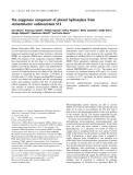 Báo cáo khoa học:  The oxygenase component of phenol hydroxylase from Acinetobacter radioresistens S13