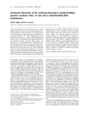 Báo cáo khoa học:  Functional dissection of the Schizosaccharomyces pombe Holliday junction resolvase Ydc2: in vivo role in mitochondrial DNA maintenance