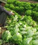 Giảm tổn thất cho rau sau thu hoạch