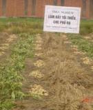 Kỹ thuật trồng đậu tương bằng phương pháp làm đất tối thiểu