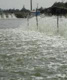 Một số chất có thể thay thế công dụng của Trifluralin trong nuôi trồng thủy sản.