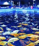 7Quy trình kỹ thuật nuôi cá Vược