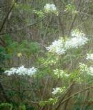 Hoa lưng chừng núi