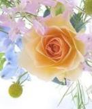 Trái tim và hoa hồng