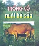 Cách trồng cỏ nuôi bò sữa
