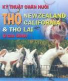 Kỹ thuật chăn nuôi thỏ Newzeland California và thỏ lai ở gia đình