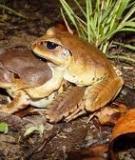 Đặc điểm sinh học, sinh sản của ếch