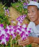 Các kỹ thuật trồng hoa lan