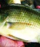 Những hiểu biết chung về bệnh của cá