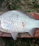 Những biện pháp phòng bệnh của cá