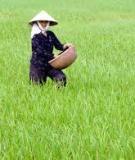 Các loại phân bón sử dụng trong nông nghiệp