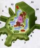 Công nghệ sinh học và tế bào thực vật