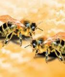 Quản lý ong theo thời vụ