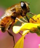 Công nghệ khai thác sản phẩm ong