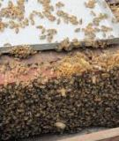 Công cụ nuôi ong
