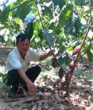 Các cây dược liệu trồng xen dưới tán