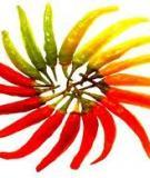 GIỐNG ỚT-QUY PHẠM KHẢO NGHIỆM GIÁ TRỊ CANH TÁC VÀ GIÁ TRỊ SỬ DỤNGQUY PHẠM KHẢO NGHIỆM GIÁ TRỊ CANH TÁC VÀ GIÁ TRỊ SỬ DỤNGHot pepper and Sweet pepper Varieties-Procedure to conduct tests for Value of Cultivation and Use (Ban hành kèm theo Quyết định số 1698 QĐ/BNN-KHCN, ngày