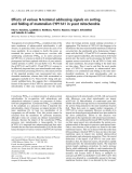 Báo cáo khoa học:  Effects of various N-terminal addressing signals on sorting and folding of mammalian CYP11A1 in yeast mitochondria