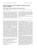 Báo cáo khoa học:  Human proteoglycan testican-1 inhibits the lysosomal cysteine protease cathepsin L