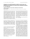 Báo cáo khoa học:  Endogenous mono-ADP-ribosylation mediates smooth muscle cell proliferation and migration via protein kinase N-dependent induction of c-fos expression