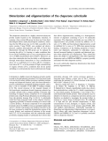 Báo cáo khoa học:  Dimerization and oligomerization of the chaperone calreticulin