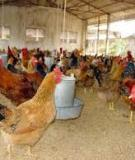 Bài giảng chăn nuôi khuyến nông