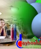 Tính độc của các hợp chất thơm halogen hóa