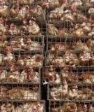 EFFECTS OF TARIFFS AND SANITARY BARRIERS  ON HIGH- AND LOW-VALUE POULTRY TRADE