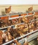 Vertical Integration and Contracting in  the U.S.  Poultry Sector
