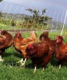 Pastured Poultry Production  An Evaluation of Its Sustainability in Hawaii