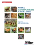 Keeping Garden Chickens in North Carolina