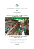 Assessment of the Nigerian poultry market chain  to improve biosecurity