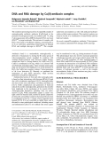 Báo cáo Y học: DNA and RNA damage by Cu(II)-amikacin complex