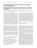 Báo cáo Y học:  Inhibition of hyaluronan synthesis in Streptococcus equi FM100 by 4-methylumbelliferone
