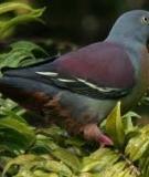 Hướng dẫn cách nuôi chim bồ câu đạt năng suất cao