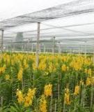 Nông dân công nghệ cao - Kỹ thuật trồng lan