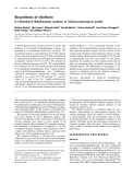 Báo cáo khoa học:  Biosynthesis of riboflavin 6,7-Dimethyl-8-ribityllumazine synthase of Schizosaccharomyces pombe