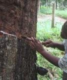 GLOBAL FOREST RESOURCES  ASSESSMENT 2010: COUNTRY REPORT KENYA