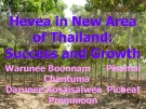 Hevea in New Area  of Thailand:  Success and Growth